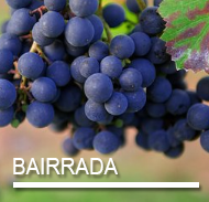 BAIRRADA.png